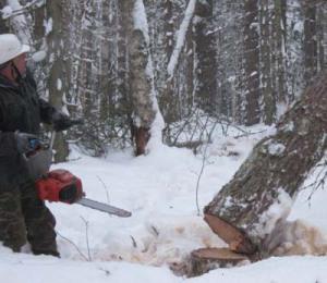вакансии лесного хозяйства вальщик