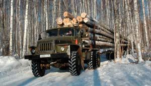 вакансии лесного хозяйства
