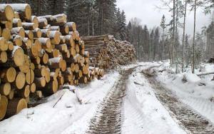 услуги лесозаготовки