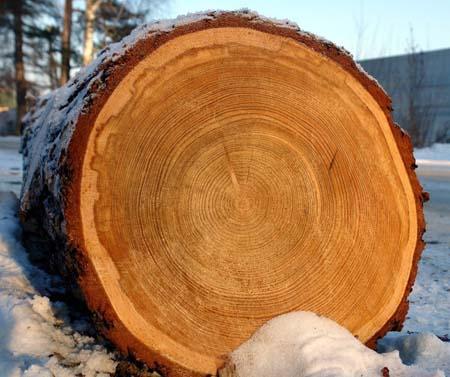 круглый лес купить в красноярске